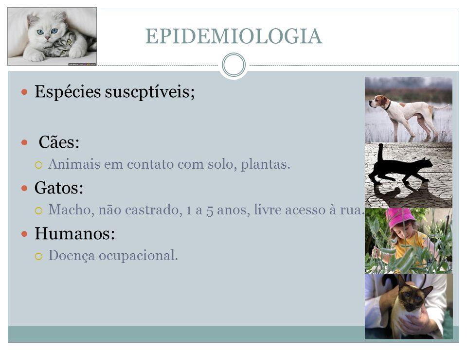 EPIDEMIOLOGIA Espécies suscptíveis; Cães: Animais em contato com solo, plantas.