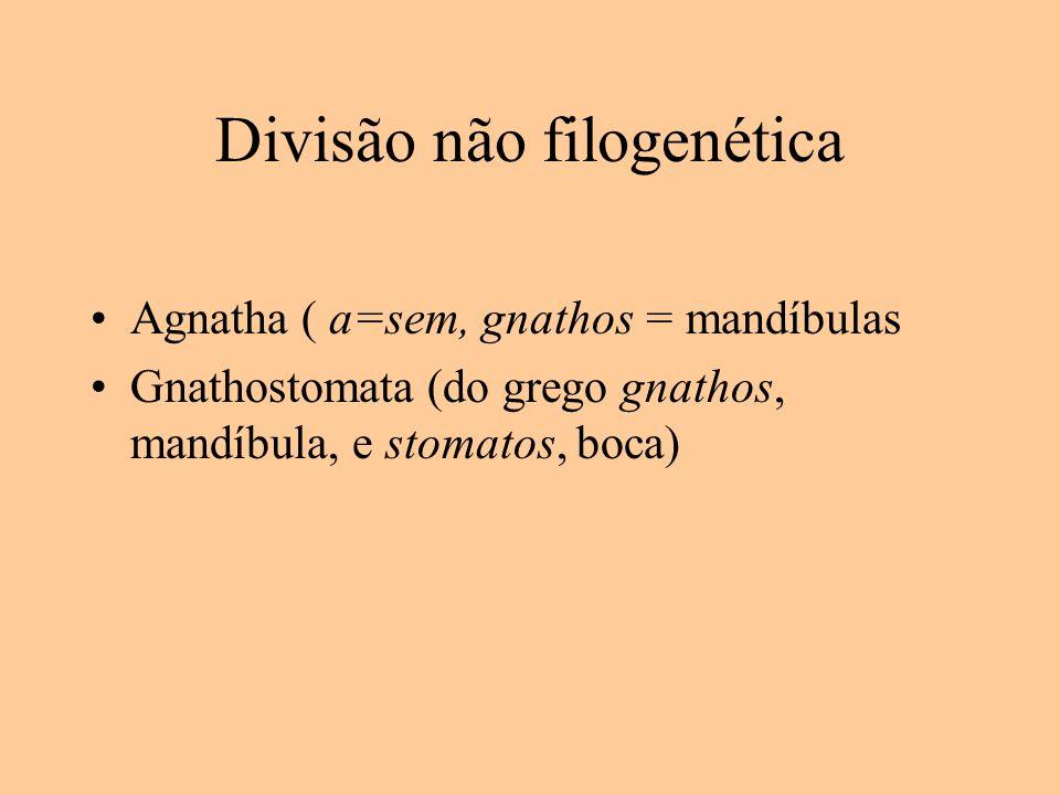 Divisão não filogenética Agnatha ( a=sem, gnathos = mandíbulas Gnathostomata (do grego gnathos, mandíbula, e stomatos, boca)