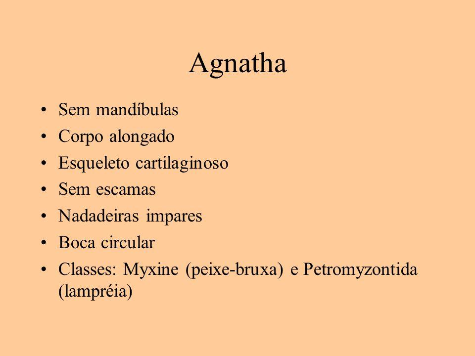 Agnatha Sem mandíbulas Corpo alongado Esqueleto cartilaginoso Sem escamas Nadadeiras impares Boca circular Classes: Myxine (peixe-bruxa) e Petromyzont