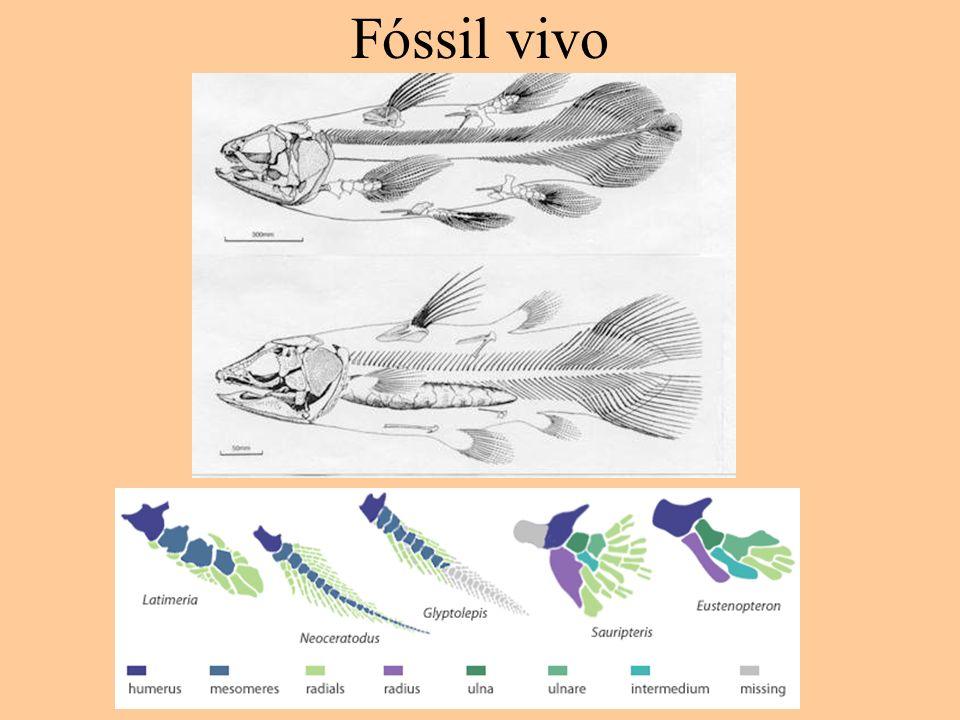 Fóssil vivo
