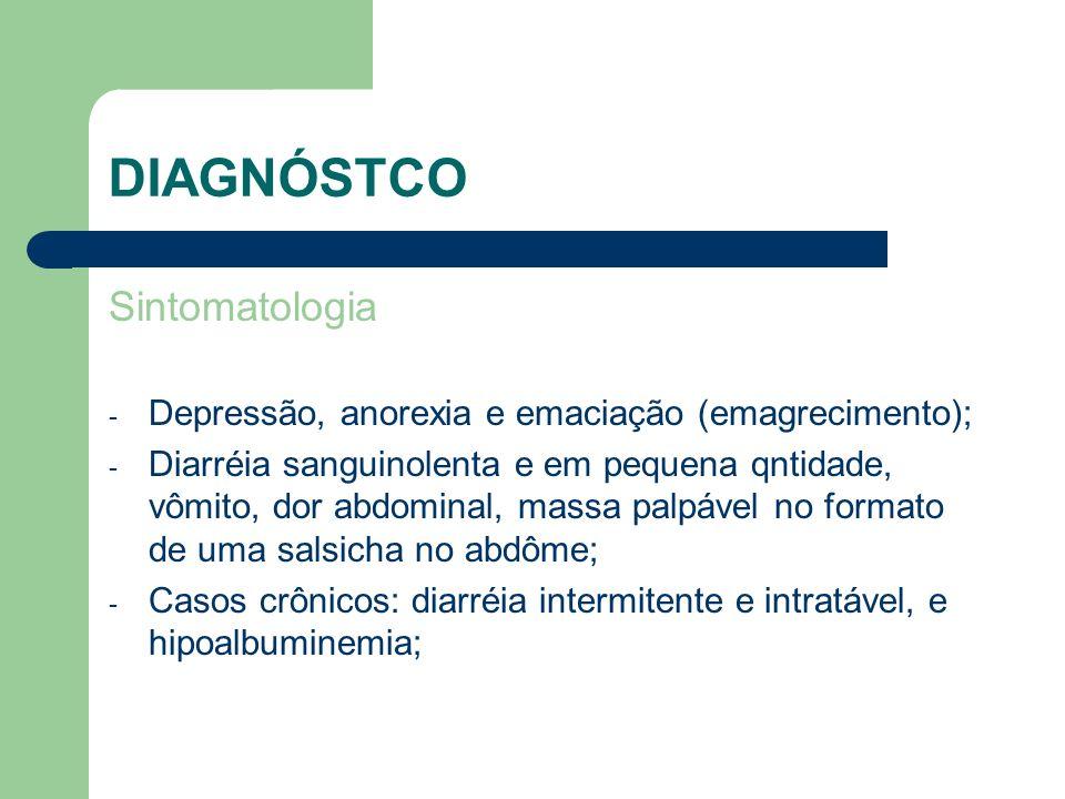 DIAGNÓSTCO Sintomatologia - Depressão, anorexia e emaciação (emagrecimento); - Diarréia sanguinolenta e em pequena qntidade, vômito, dor abdominal, ma