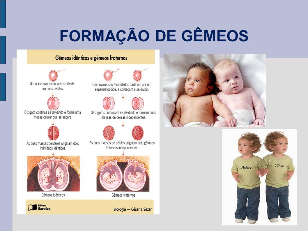 FORMAÇÃO DE GÊMEOS