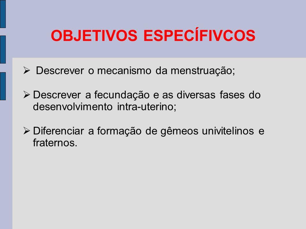 CICLO HORMONAL Fase pré-ovulatória: ESTROGÊNIO é o principal hormônio produzido.