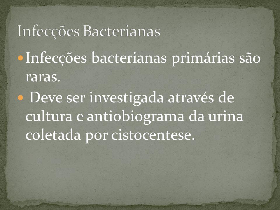 Infecções bacterianas primárias são raras. Deve ser investigada através de cultura e antiobiograma da urina coletada por cistocentese.
