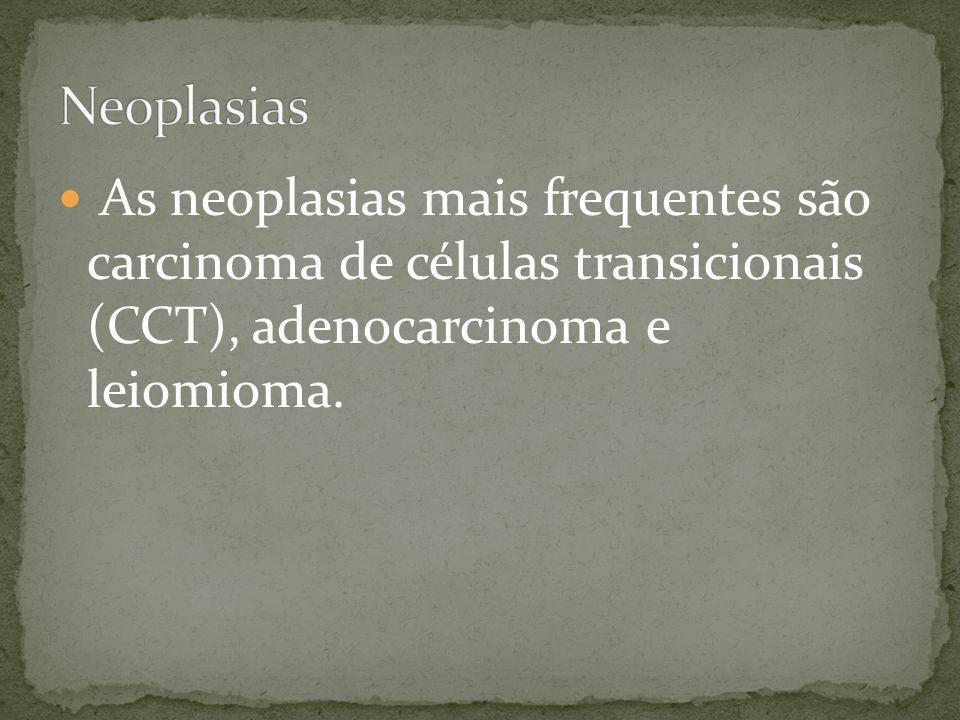 As neoplasias mais frequentes são carcinoma de células transicionais (CCT), adenocarcinoma e leiomioma.