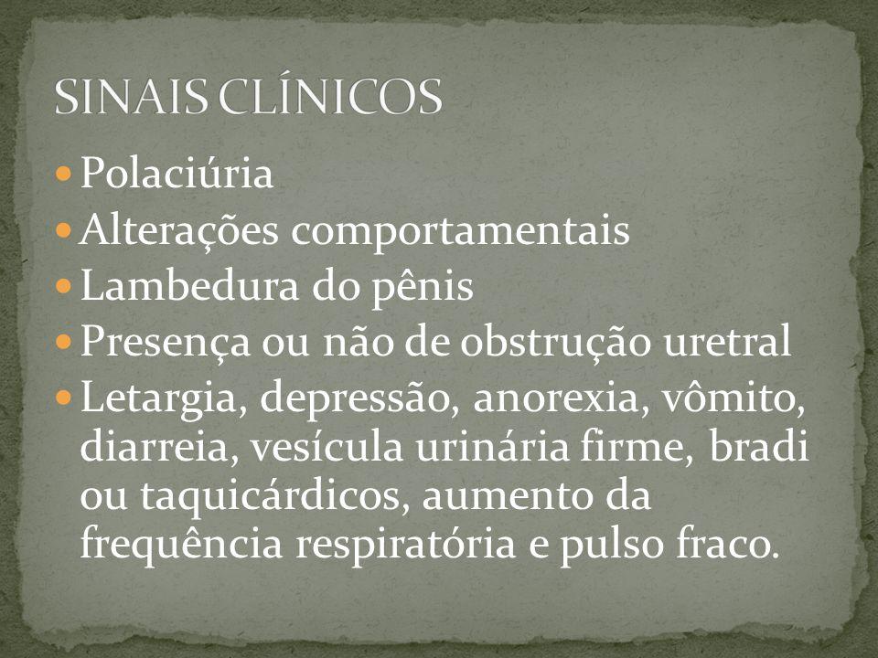 Polaciúria Alterações comportamentais Lambedura do pênis Presença ou não de obstrução uretral Letargia, depressão, anorexia, vômito, diarreia, vesícul