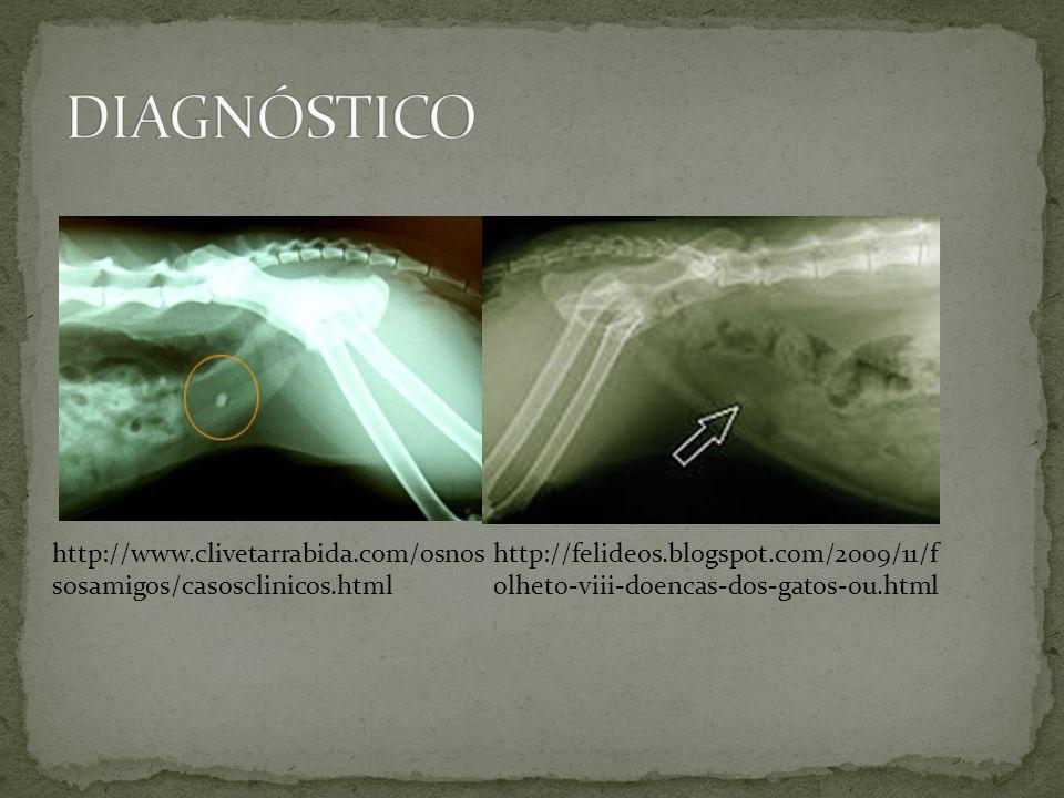 http://www.clivetarrabida.com/osnos sosamigos/casosclinicos.html http://felideos.blogspot.com/2009/11/f olheto-viii-doencas-dos-gatos-ou.html