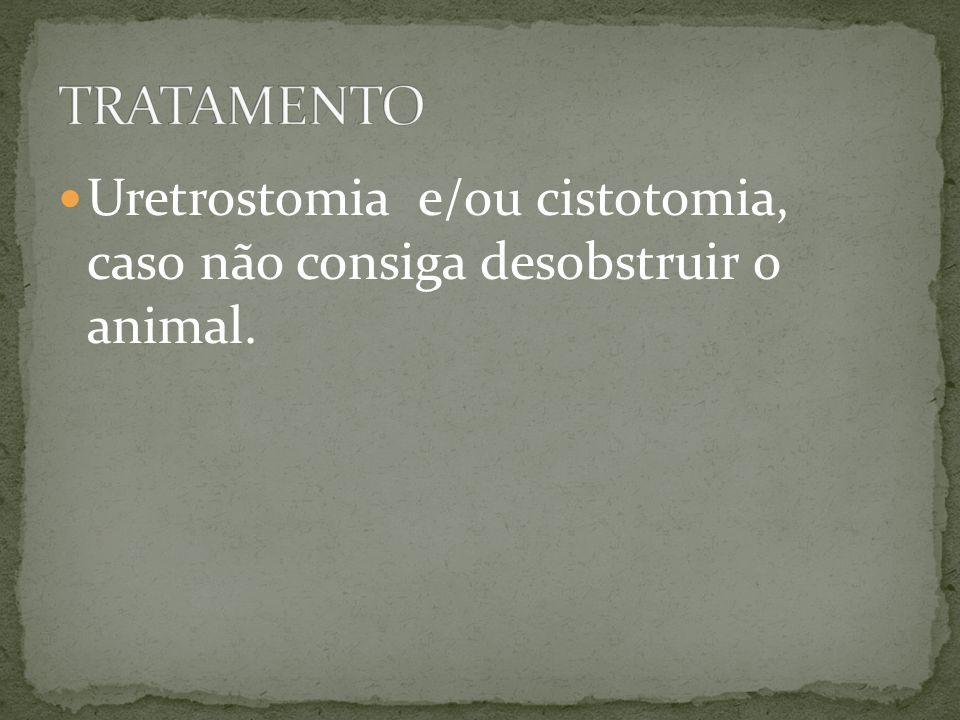 Uretrostomia e/ou cistotomia, caso não consiga desobstruir o animal.