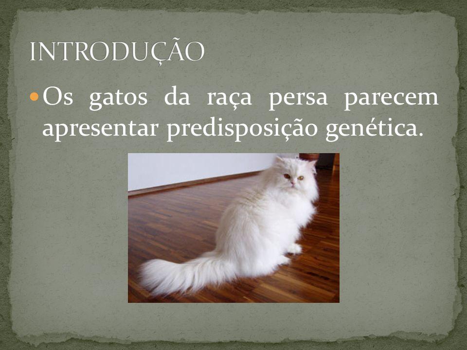 Os gatos da raça persa parecem apresentar predisposição genética.