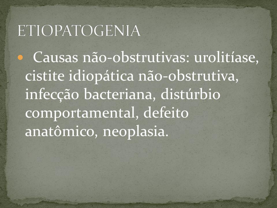 Causas não-obstrutivas: urolitíase, cistite idiopática não-obstrutiva, infecção bacteriana, distúrbio comportamental, defeito anatômico, neoplasia.