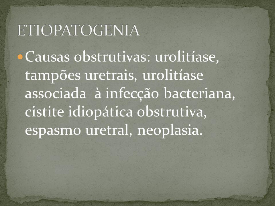 Causas obstrutivas: urolitíase, tampões uretrais, urolitíase associada à infecção bacteriana, cistite idiopática obstrutiva, espasmo uretral, neoplasi