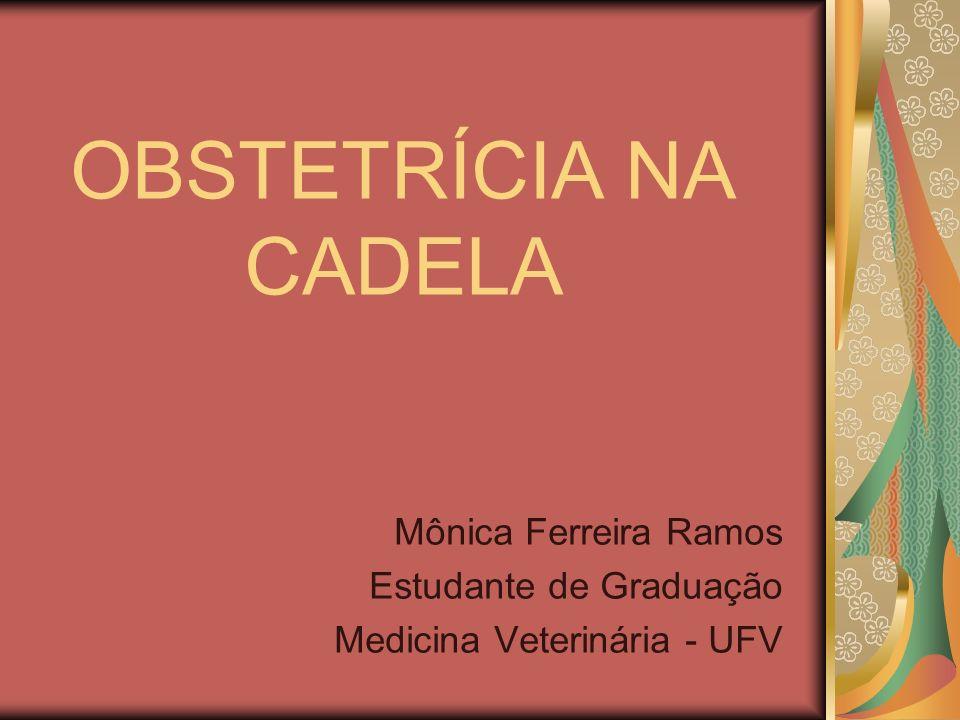 OBSTETRÍCIA NA CADELA Mônica Ferreira Ramos Estudante de Graduação Medicina Veterinária - UFV