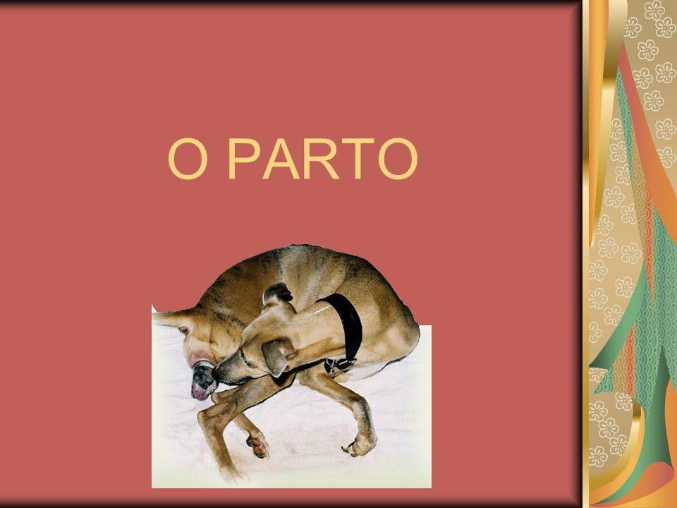 O PARTO