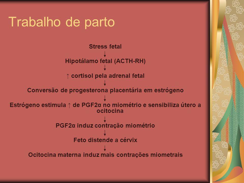 Trabalho de parto Stress fetal Hipotálamo fetal (ACTH-RH) cortisol pela adrenal fetal Conversão de progesterona placentária em estrógeno Estrógeno est