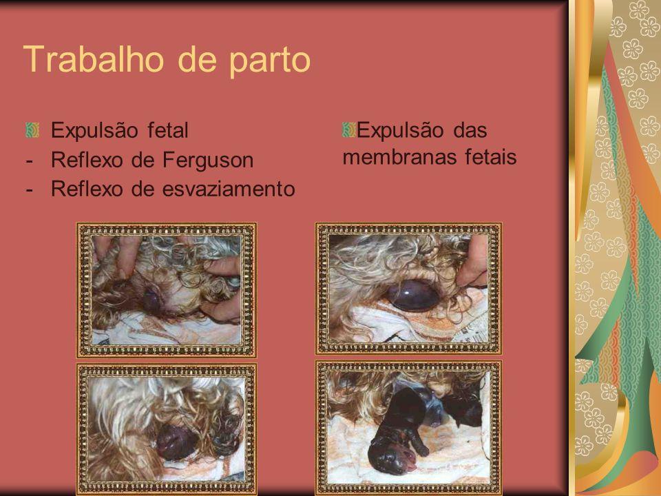 Trabalho de parto Expulsão fetal -Reflexo de Ferguson -Reflexo de esvaziamento Expulsão das membranas fetais
