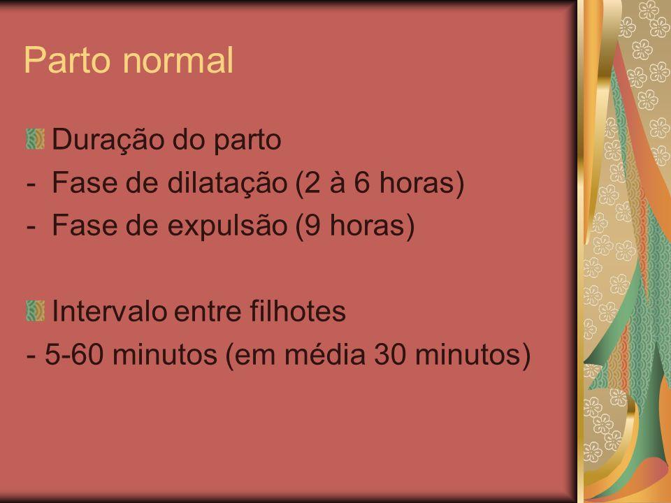 Duração do parto -Fase de dilatação (2 à 6 horas) -Fase de expulsão (9 horas) Intervalo entre filhotes - 5-60 minutos (em média 30 minutos)