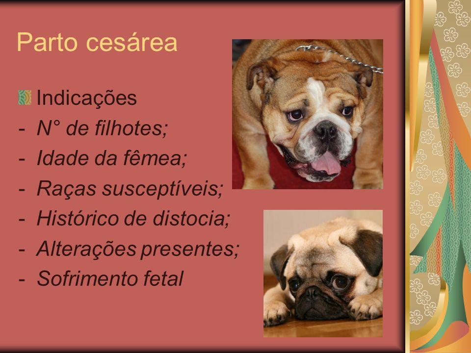 Parto cesárea Indicações -N° de filhotes; -Idade da fêmea; -Raças susceptíveis; -Histórico de distocia; -Alterações presentes; -Sofrimento fetal
