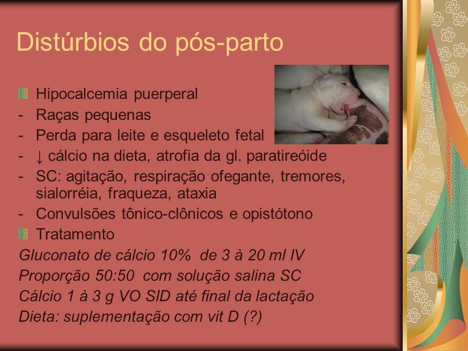 Distúrbios do pós-parto Hipocalcemia puerperal -Raças pequenas -Perda para leite e esqueleto fetal - cálcio na dieta, atrofia da gl. paratireóide -SC: