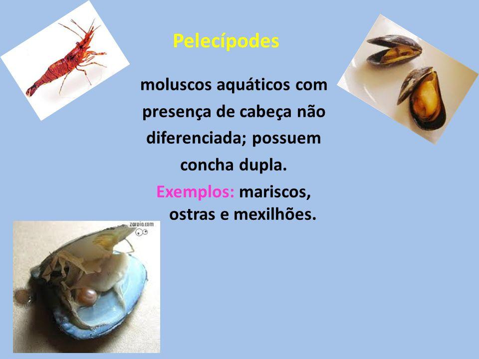 moluscos aquáticos com presença de cabeça não diferenciada; possuem concha dupla. Exemplos: mariscos, ostras e mexilhões. Pelecípodes