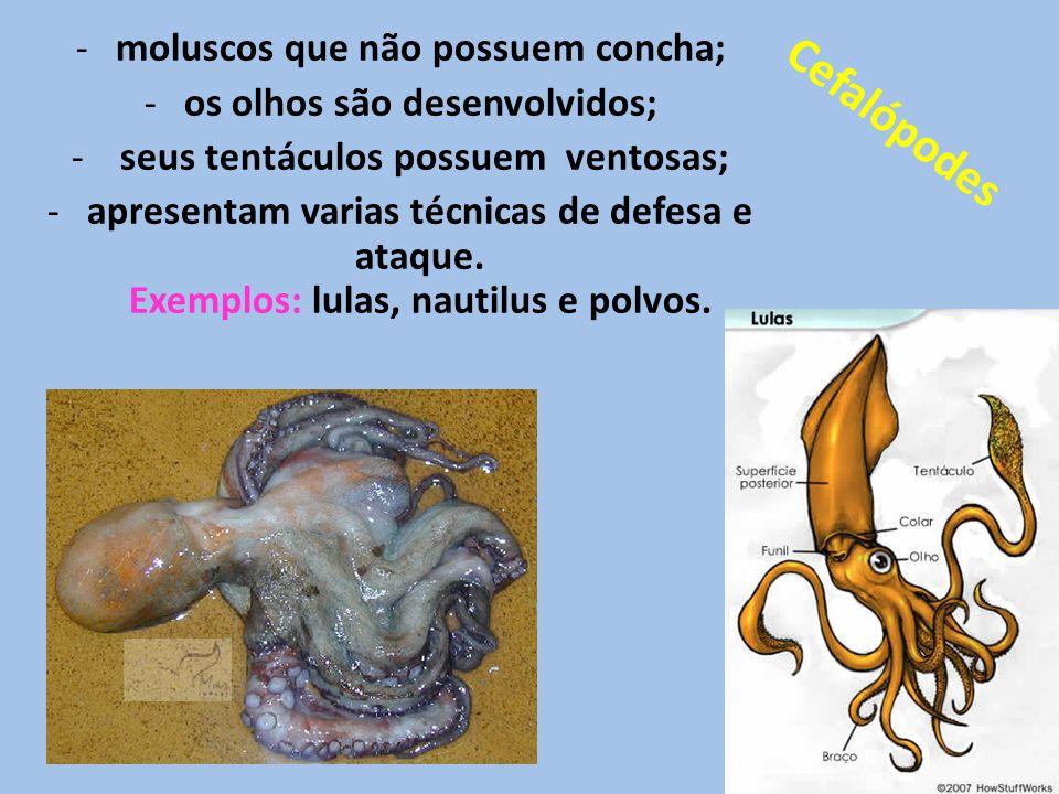 -moluscos que não possuem concha; -os olhos são desenvolvidos; - seus tentáculos possuem ventosas; -apresentam varias técnicas de defesa e ataque. Exe