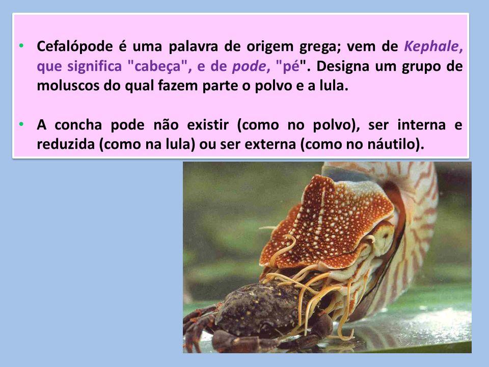 Cefalópode é uma palavra de origem grega; vem de Kephale, que significa