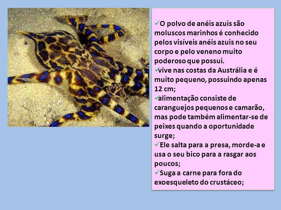O polvo de anéis azuis são moluscos marinhos é conhecido pelos visíveis anéis azuis no seu corpo e pelo veneno muito poderoso que possui. vive nas cos