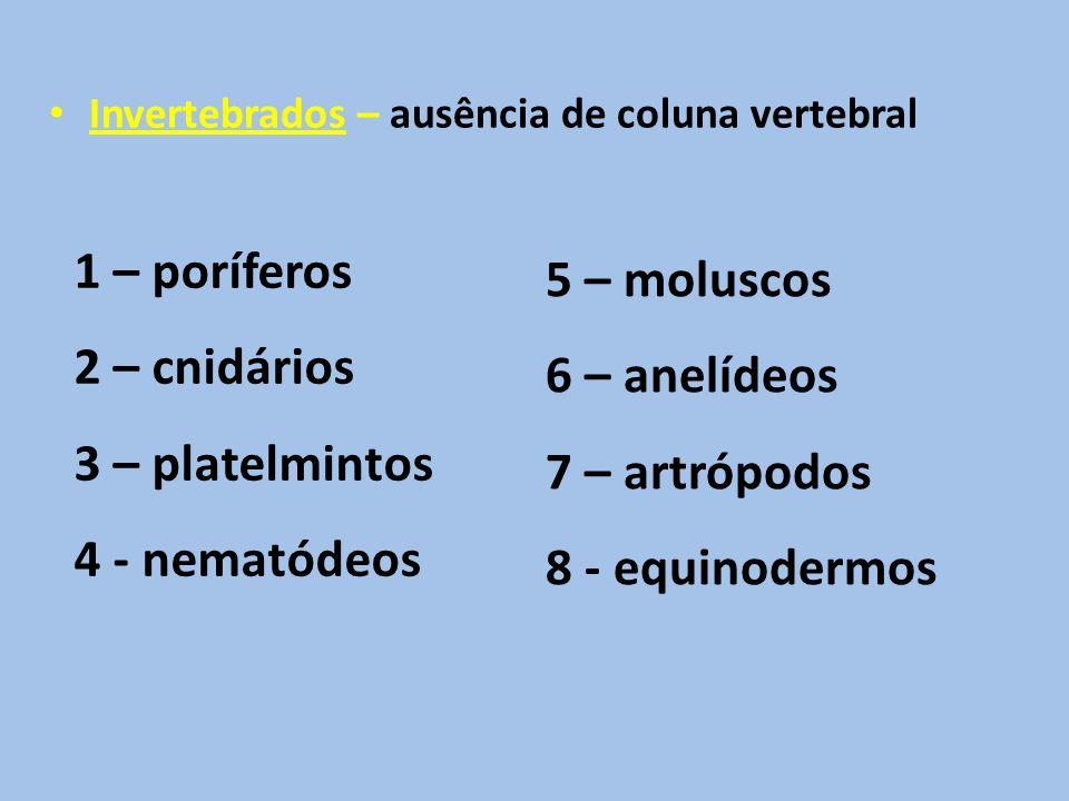 Invertebrados – ausência de coluna vertebral 1 – poríferos 2 – cnidários 3 – platelmintos 4 - nematódeos 5 – moluscos 6 – anelídeos 7 – artrópodos 8 - equinodermos