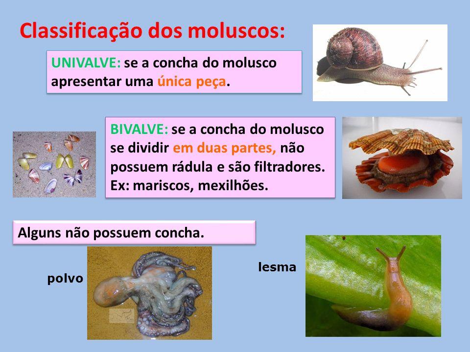 UNIVALVE: se a concha do molusco apresentar uma única peça. BIVALVE: se a concha do molusco se dividir em duas partes, não possuem rádula e são filtra
