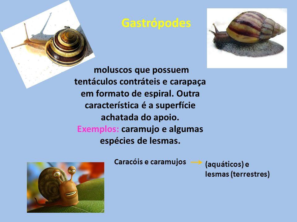 Gastrópodes Caracóis e caramujos (aquáticos) e lesmas (terrestres) moluscos que possuem tentáculos contráteis e carapaça em formato de espiral. Outra