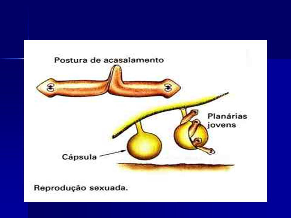 Fasciola hepatica (monoicos) FASCIOLOSE