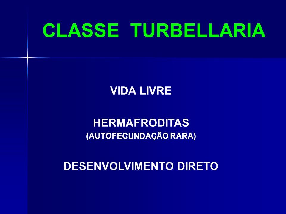 CLASSE TURBELLARIA VIDA LIVRE HERMAFRODITAS (AUTOFECUNDAÇÃO RARA) DESENVOLVIMENTO DIRETO
