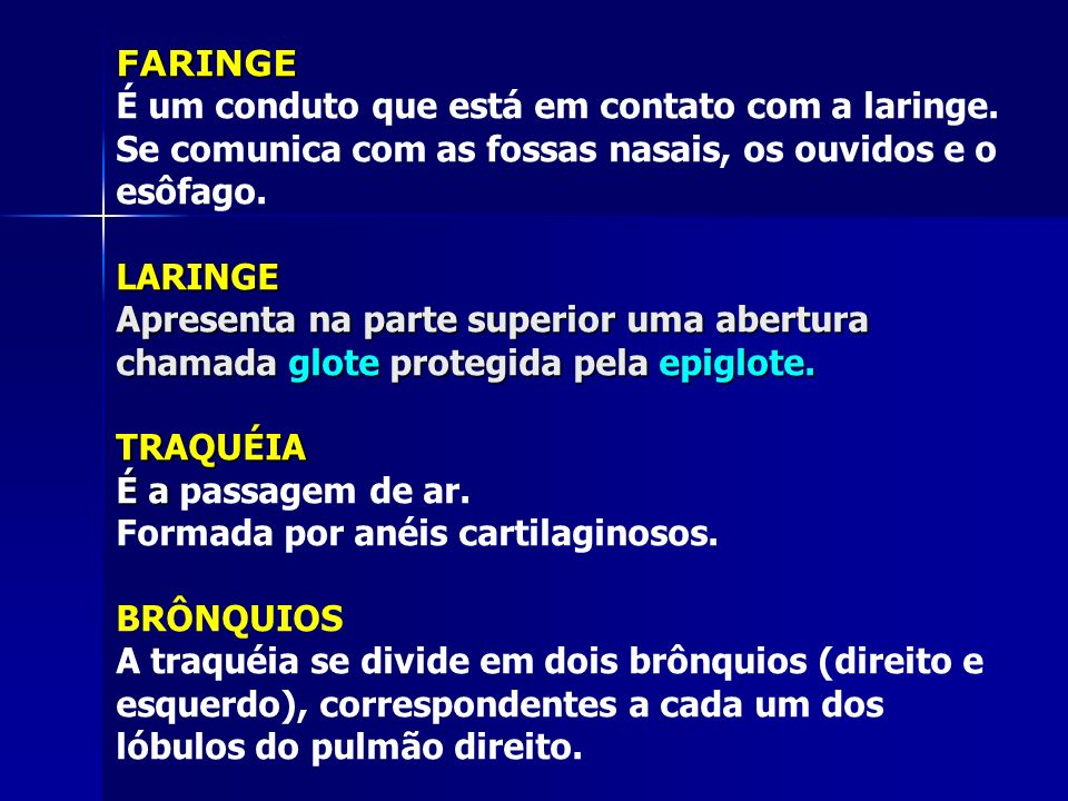 FARINGE É um conduto que está em contato com a laringe.