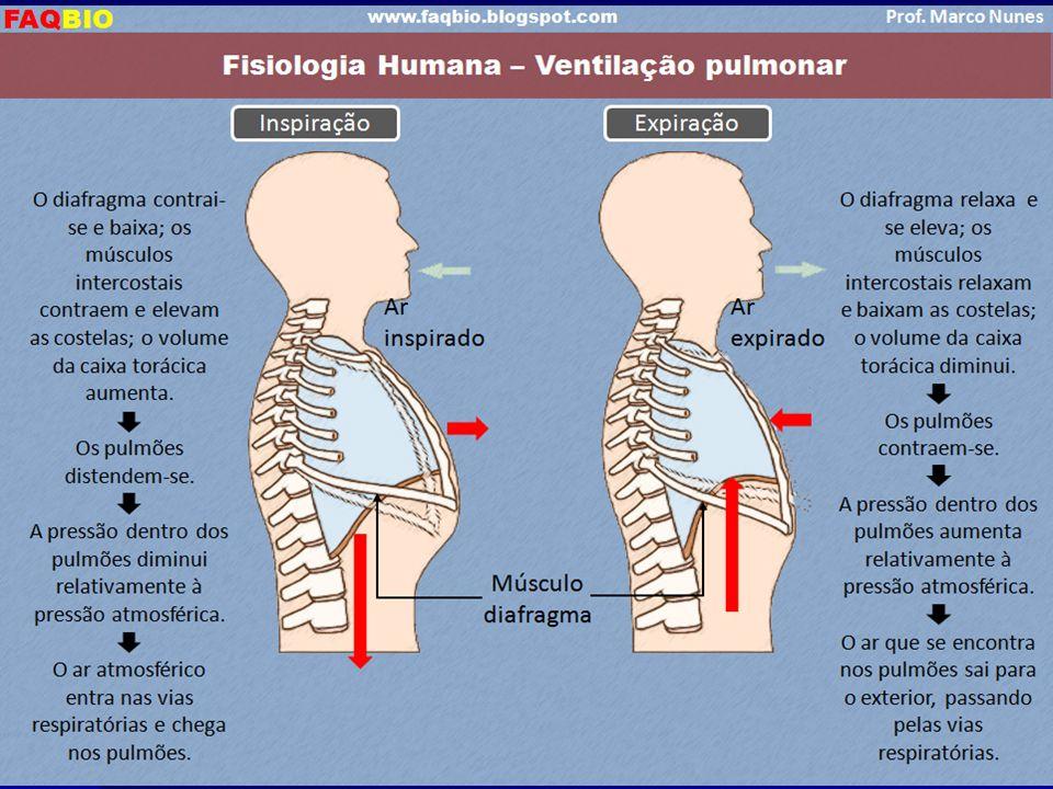 MOVIMENTOS RESPIRATÓRIOS MOVIMENTOS RESPIRATÓRIOSINSPIRAÇÃO Aumenta o volume pulmonar; Diminui a pressão intrapulmonar; Diafragma contrai; Músculos in