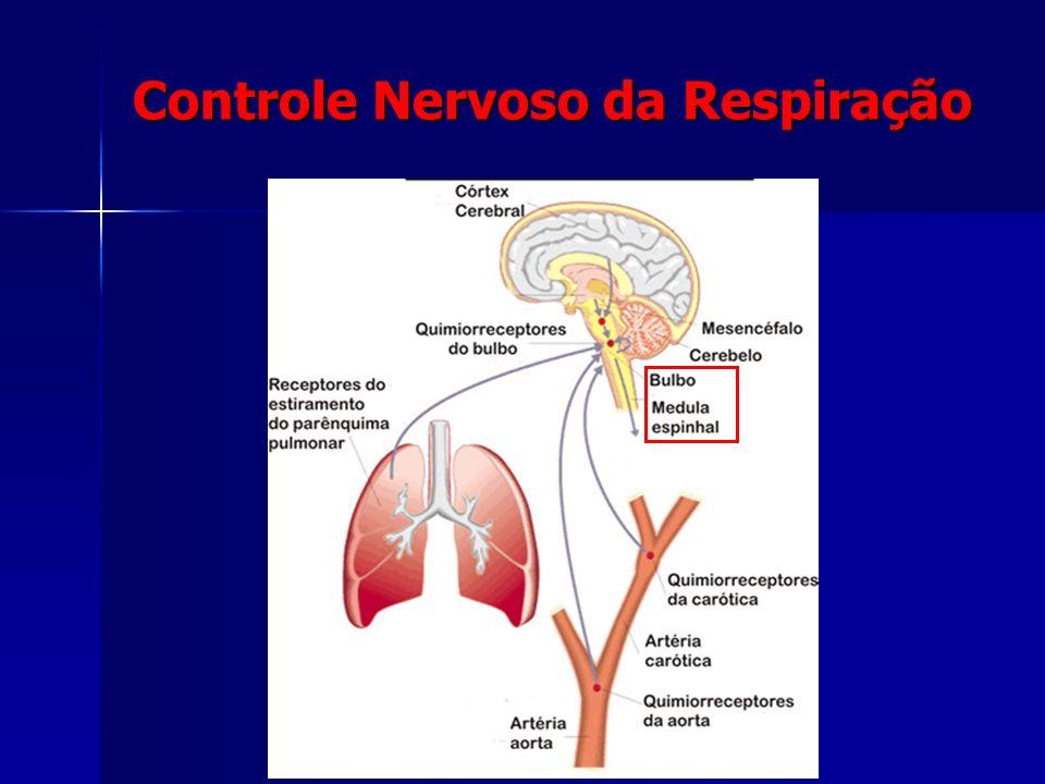 Controle Respiratório (Bulbo e medula espinhal) Músculos respiratórios (Diafragma e intercostais) Local de trocas gasosas (Alvéolos pulmonares) Hemato