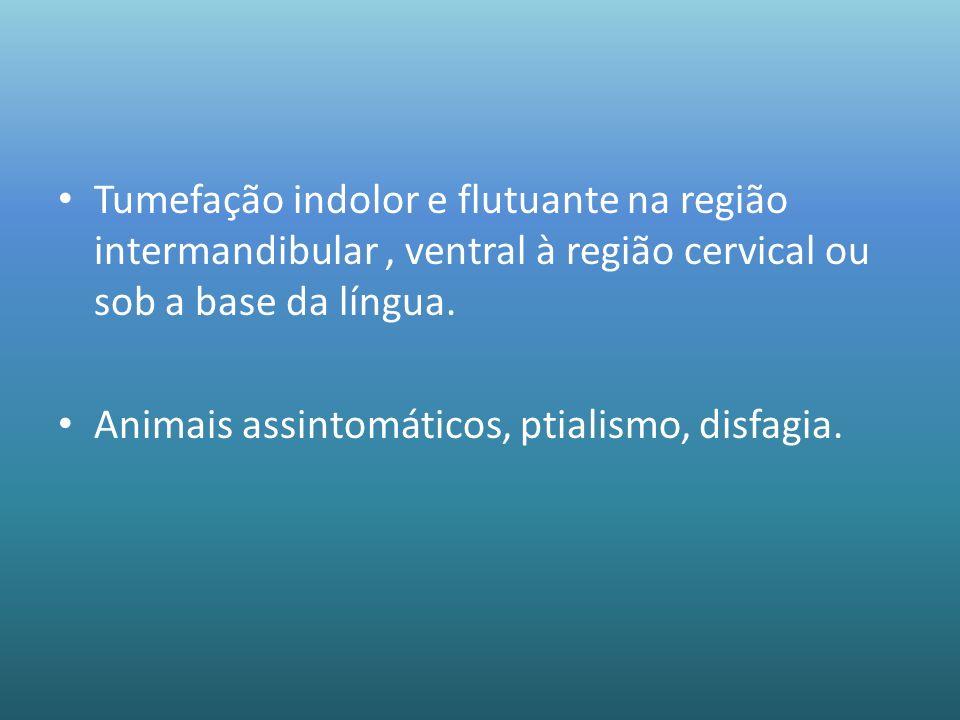 Tumefação indolor e flutuante na região intermandibular, ventral à região cervical ou sob a base da língua. Animais assintomáticos, ptialismo, disfagi