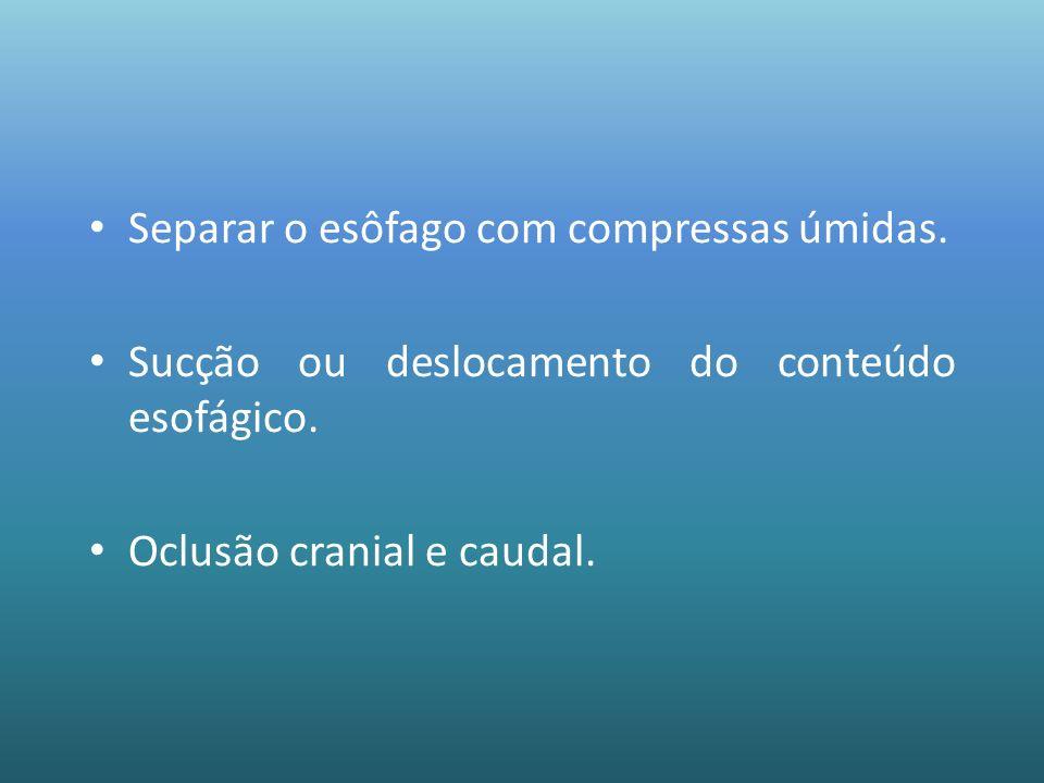 Separar o esôfago com compressas úmidas. Sucção ou deslocamento do conteúdo esofágico. Oclusão cranial e caudal.