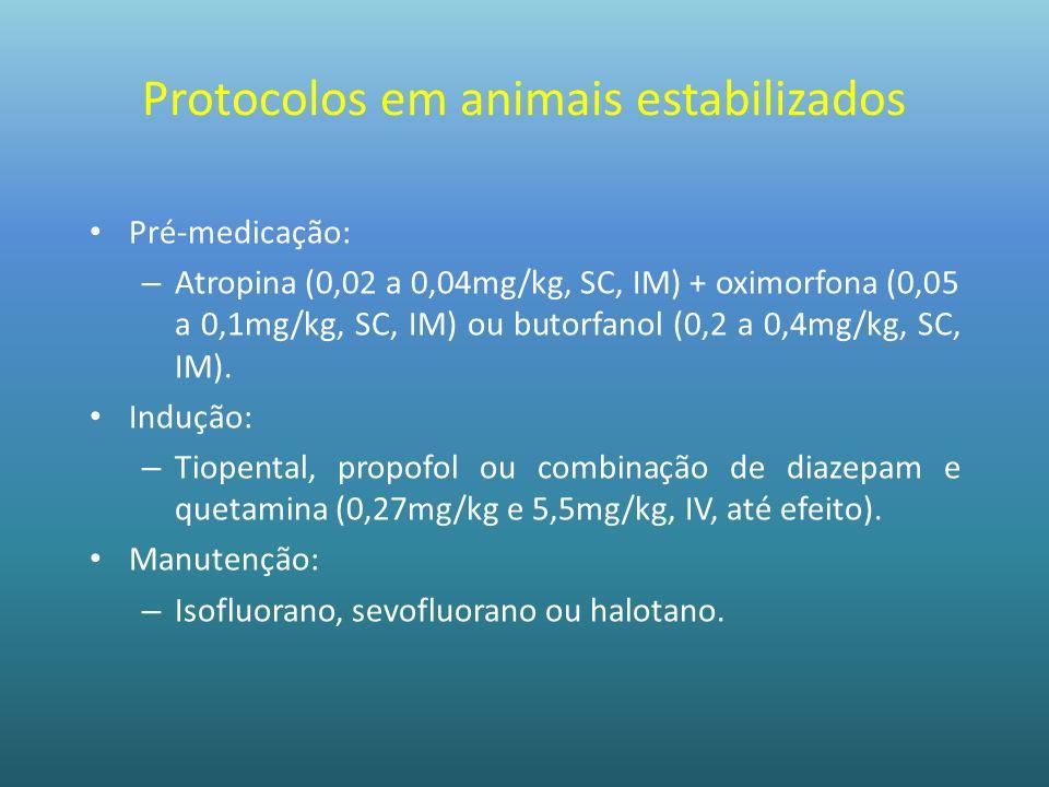 Protocolos em animais estabilizados Pré-medicação: – Atropina (0,02 a 0,04mg/kg, SC, IM) + oximorfona (0,05 a 0,1mg/kg, SC, IM) ou butorfanol (0,2 a 0