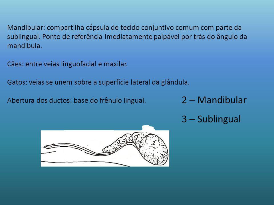 2 – Mandibular 3 – Sublingual Mandibular: compartilha cápsula de tecido conjuntivo comum com parte da sublingual. Ponto de referência imediatamente pa