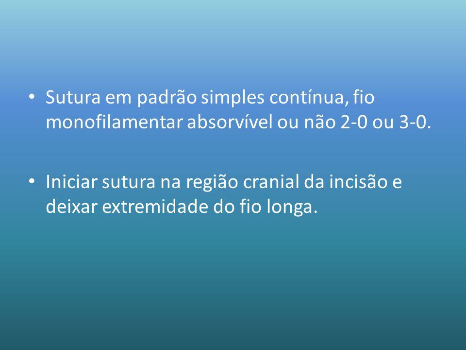 Sutura em padrão simples contínua, fio monofilamentar absorvível ou não 2-0 ou 3-0. Iniciar sutura na região cranial da incisão e deixar extremidade d