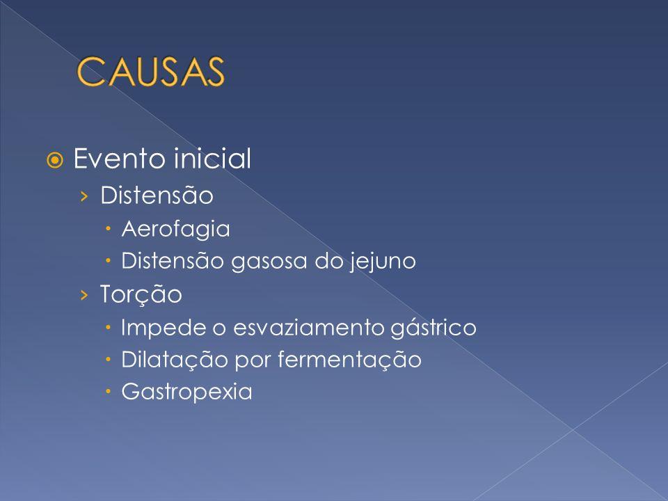 Evento inicial Distensão Aerofagia Distensão gasosa do jejuno Torção Impede o esvaziamento gástrico Dilatação por fermentação Gastropexia