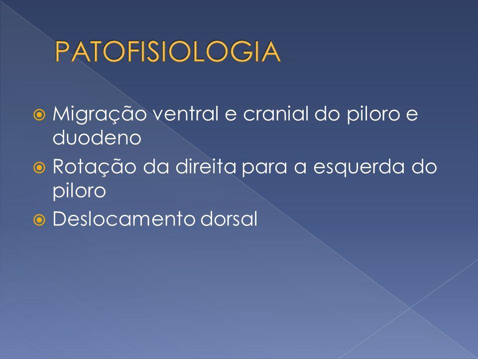 Migração ventral e cranial do piloro e duodeno Rotação da direita para a esquerda do piloro Deslocamento dorsal