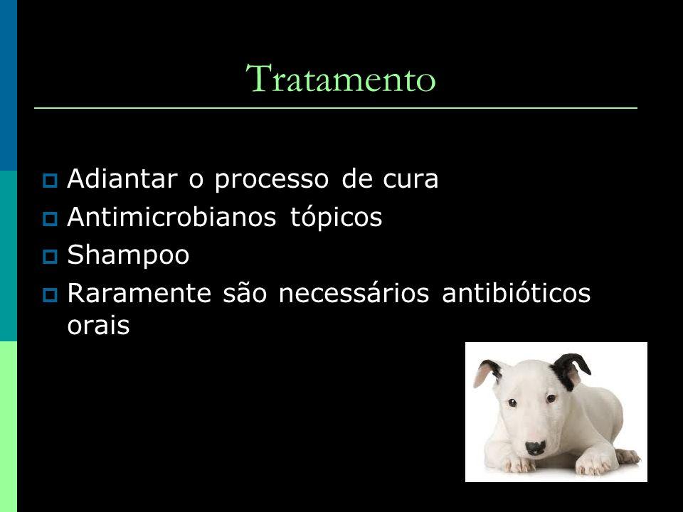Tratamento Adiantar o processo de cura Antimicrobianos tópicos Shampoo Raramente são necessários antibióticos orais
