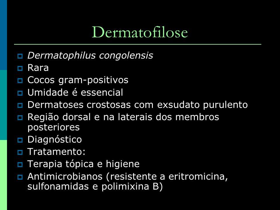 Dermatofilose Dermatophilus congolensis Rara Cocos gram-positivos Umidade é essencial Dermatoses crostosas com exsudato purulento Região dorsal e na l
