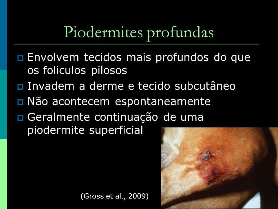 Piodermites profundas Envolvem tecidos mais profundos do que os foliculos pilosos Invadem a derme e tecido subcutâneo Não acontecem espontaneamente Ge
