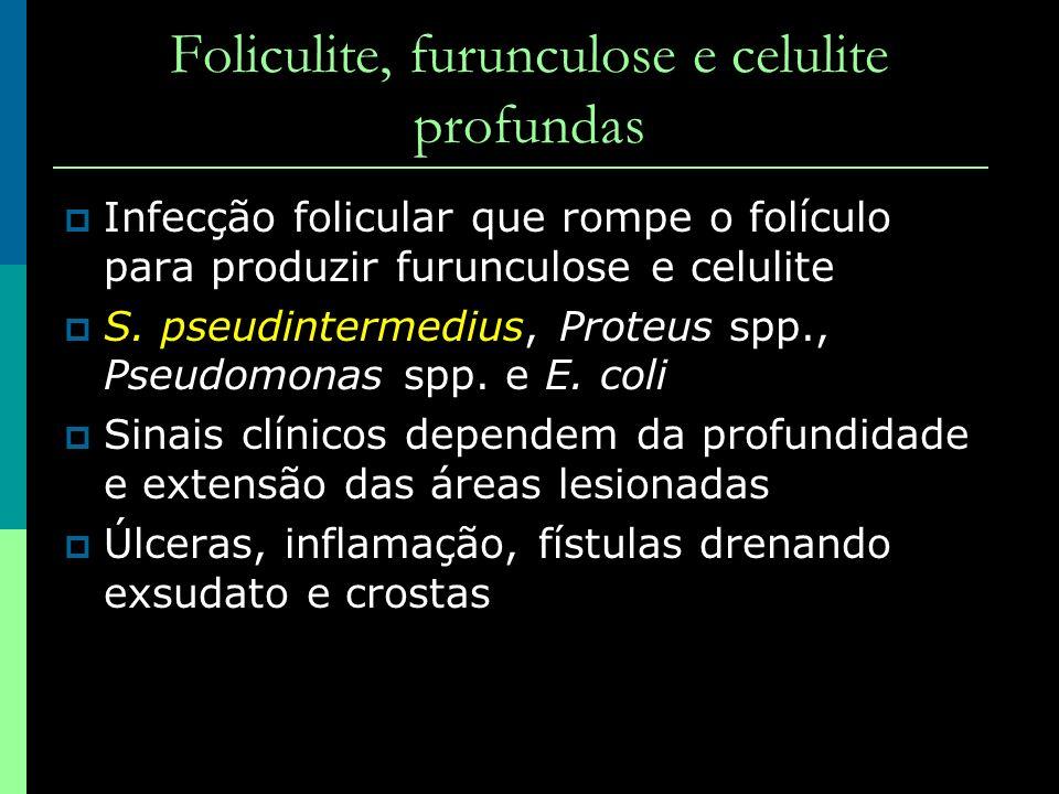 Foliculite, furunculose e celulite profundas Infecção folicular que rompe o folículo para produzir furunculose e celulite S. pseudintermedius, Proteus