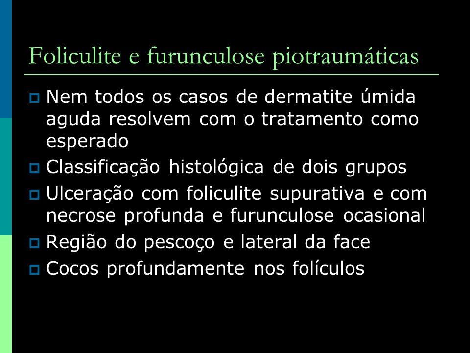 Foliculite e furunculose piotraumáticas Nem todos os casos de dermatite úmida aguda resolvem com o tratamento como esperado Classificação histológica