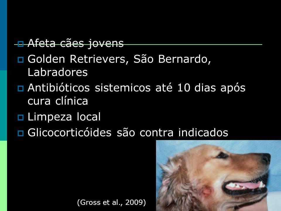 Afeta cães jovens Golden Retrievers, São Bernardo, Labradores Antibióticos sistemicos até 10 dias após cura clínica Limpeza local Glicocorticóides são