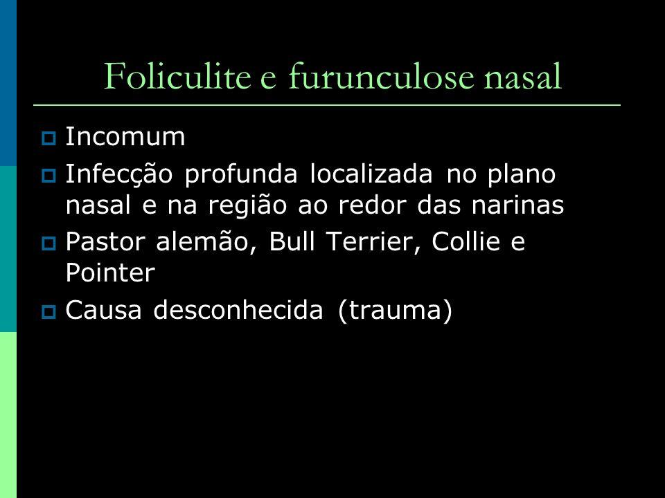 Foliculite e furunculose nasal Incomum Infecção profunda localizada no plano nasal e na região ao redor das narinas Pastor alemão, Bull Terrier, Colli
