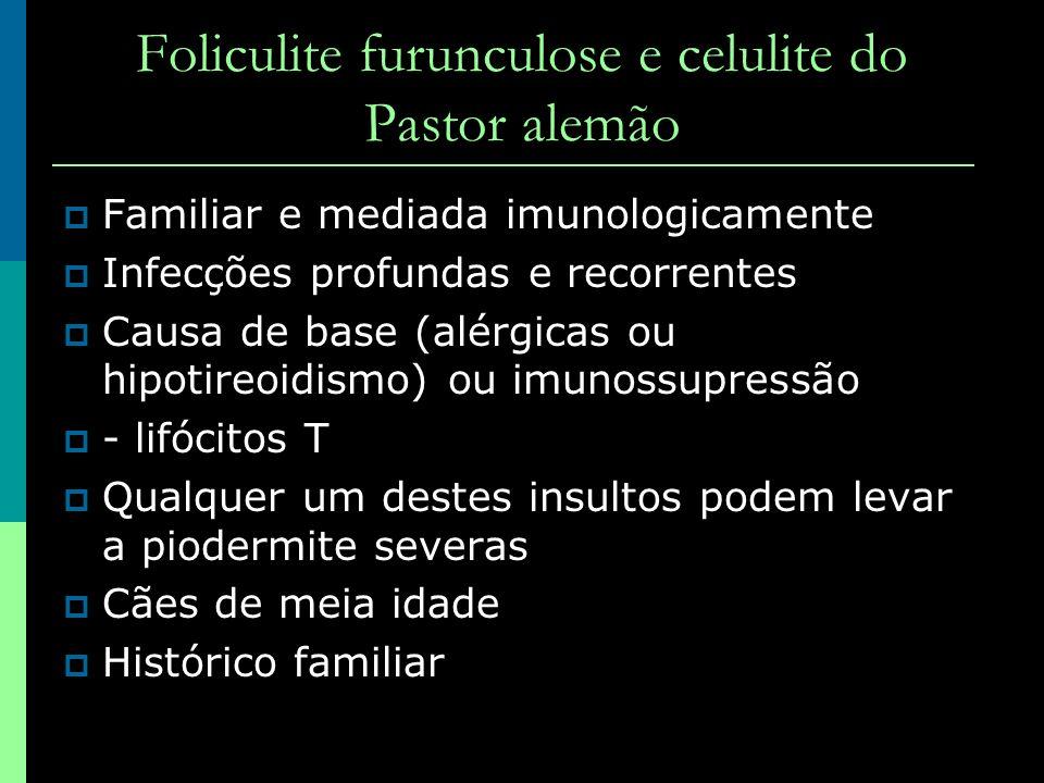 Foliculite furunculose e celulite do Pastor alemão Familiar e mediada imunologicamente Infecções profundas e recorrentes Causa de base (alérgicas ou h