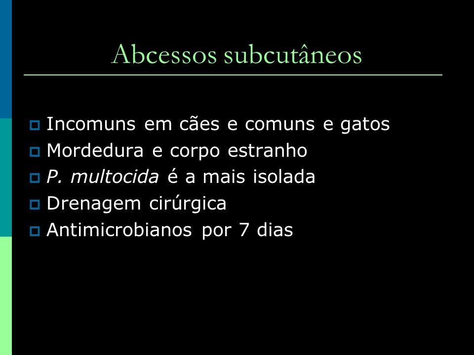 Abcessos subcutâneos Incomuns em cães e comuns e gatos Mordedura e corpo estranho P. multocida é a mais isolada Drenagem cirúrgica Antimicrobianos por